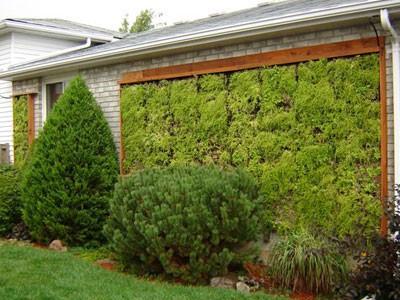 gracias a sus y la observacin de de la flora del sotobosque tropical logr crear el sistema para realizar este tipo de jardines
