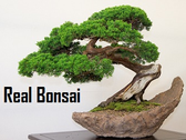 Real Bonsai